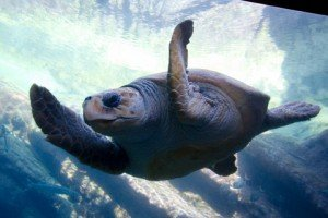 Turtles Can Swim Faster Than You Can Walk
